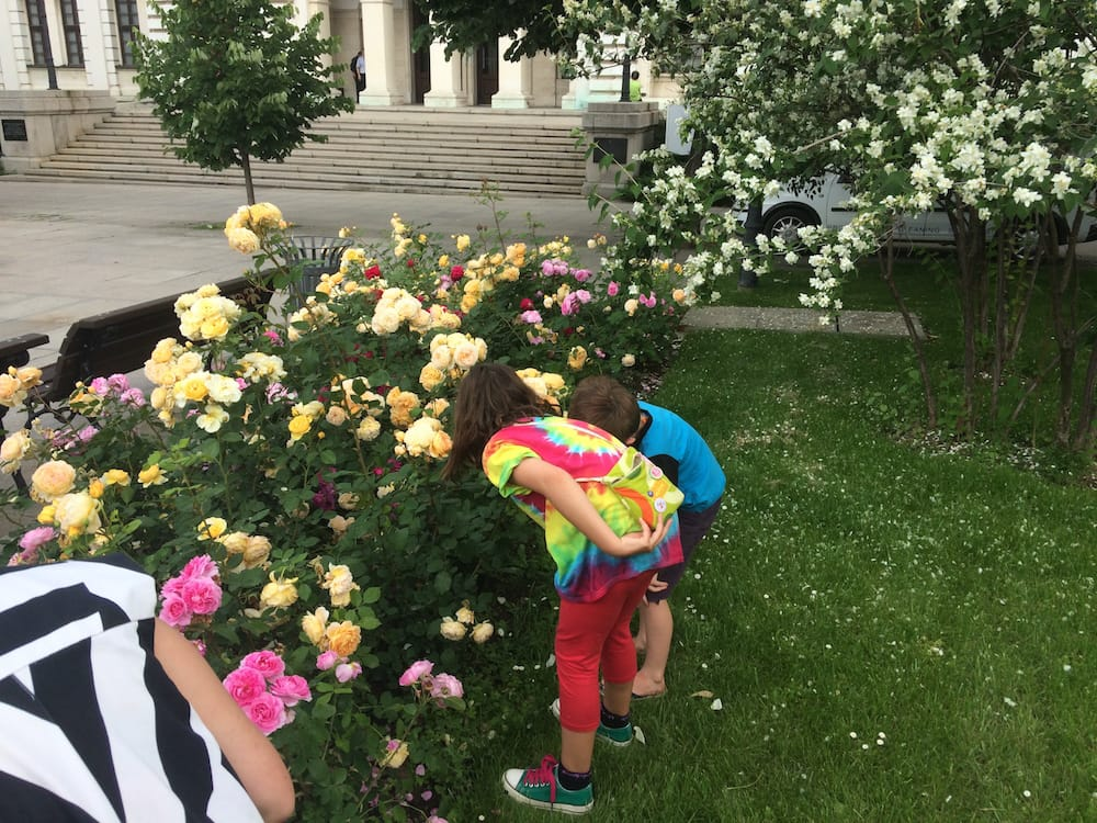 The roses in Bulgaria smell richer and sweeter than anywhere else