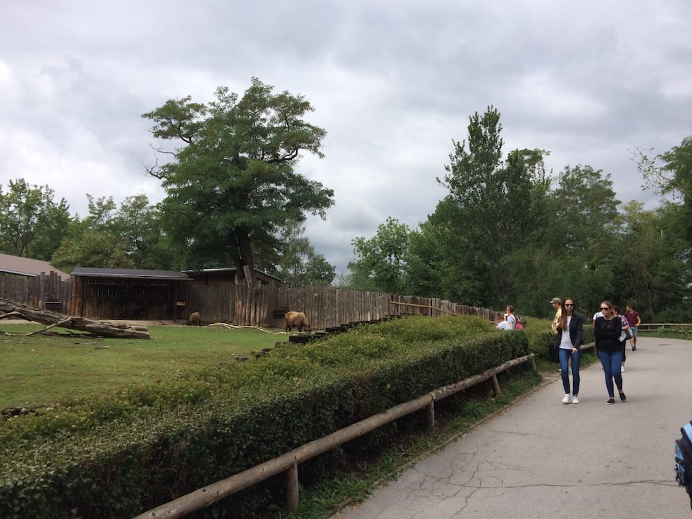 Praha Zoo is pretty mellow, I think we liked the birds best