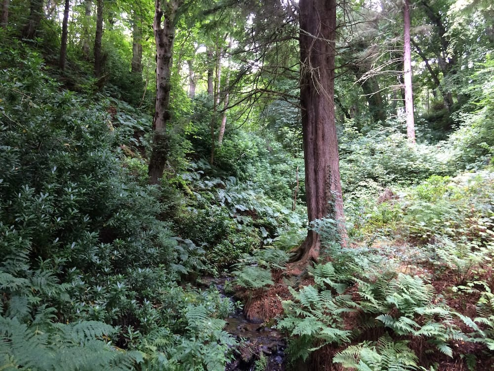 The woods above Dunrobin Castle