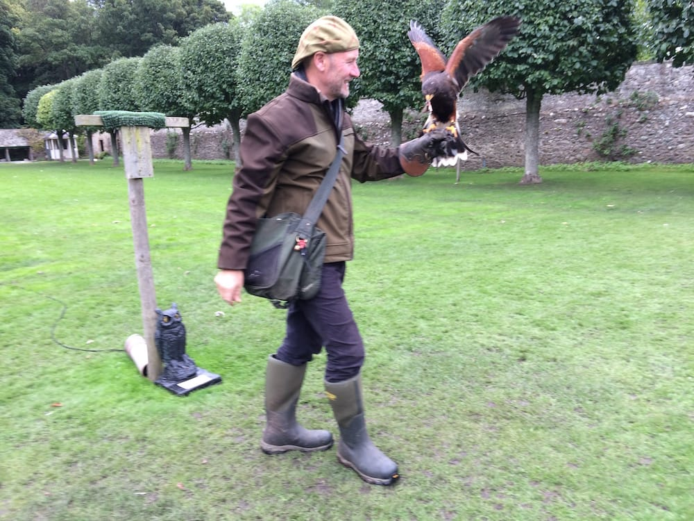 We watched the falconry show twice, it was that good