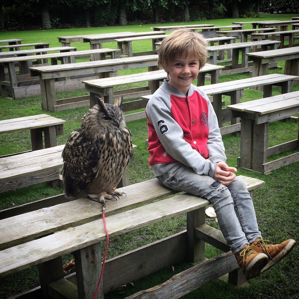 Mr.7 Gets close to a great-horned owl