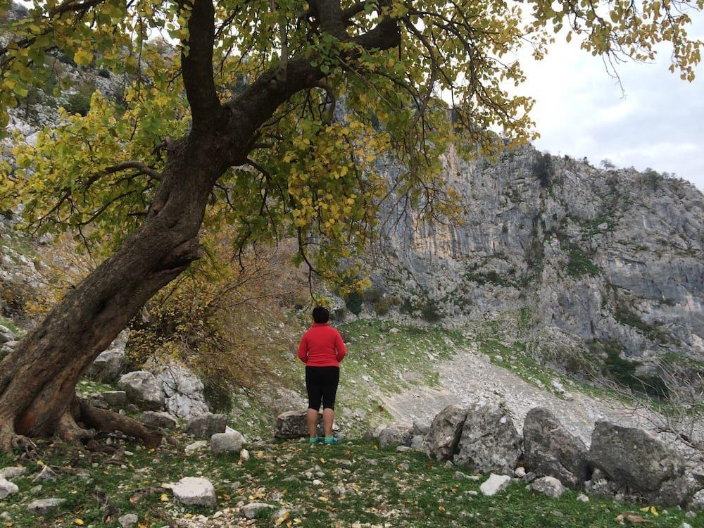 Under a black poplar tree behind St George's church, 1000 years old