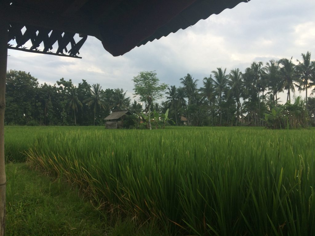 A view from one of the shacks where Guli used to rest during rice harvest