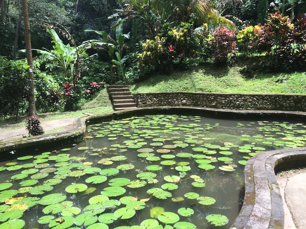 Lilypads at Goa Gajah